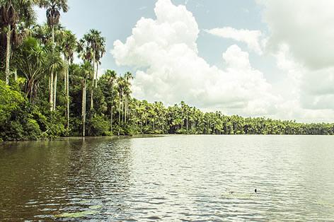 アマゾン川(イメージ)