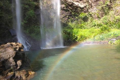 添乗員同行の旅 オセアニア・ハワイ ゴンドワナ多雨林保護区