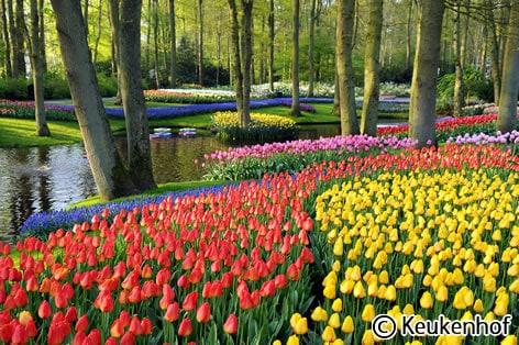 キューケンホフ公園